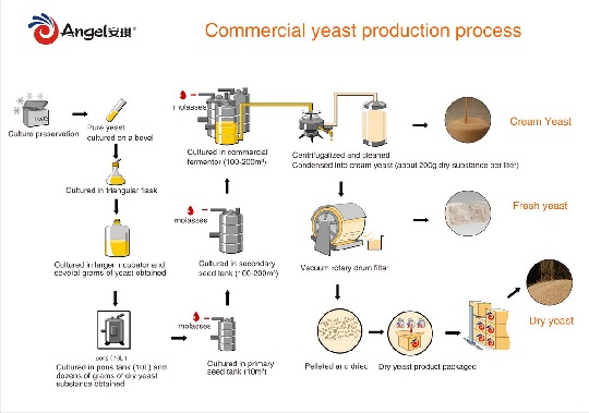 Commercial Yeast production processes