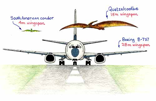 Conventional Aircraft